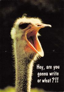 Postcard Comic Funny Fun  Hey are you gonna write or what?!! by Hallmark Cards