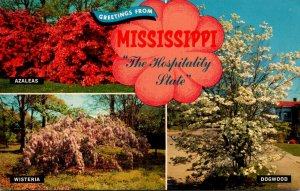 Greetings From Mississippi Showing Azaleas Wisteria and Dogwood In Bloom 1970