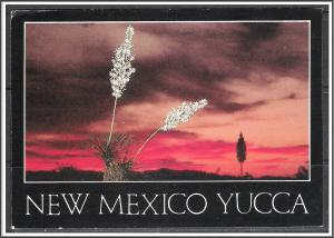 New Mexico, Yucca in Bloom Desert Sunset - [NM-015X]