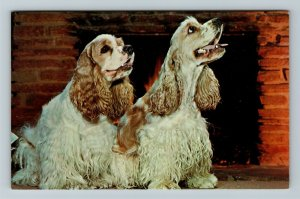 But Baby, It's Cold Outside, Cocker Spaniel Dogs Chrome Postcard