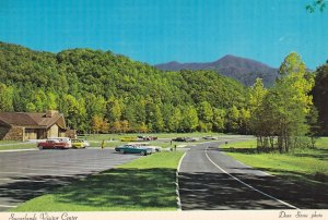 Maple Trees Sugarlands Visitor Center Great Smoky National Park Postcard