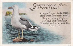 Greetings From California Beautiful Seagull