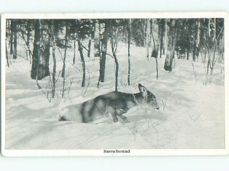 Divided-Back ANIMAL SCENE Great Postcard AA9566