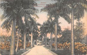Palm Avenue, Columbus Park Habana Cuba, Republica de Cuba 1923