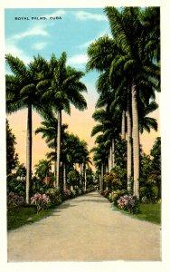 Cuba - Royal Palms
