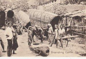 Branding Cattle , CEYLON , 00-10s
