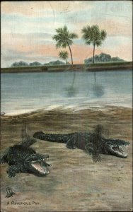 TUCK Alligators Series #2645 c1910 Postcard #4