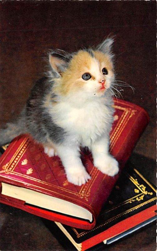 Cat Post Card, Cats Postcards Kitten on books Unused