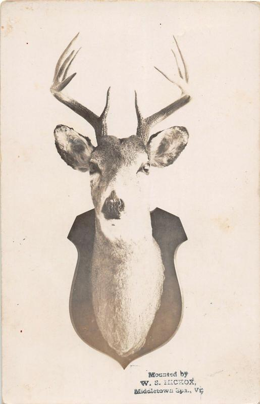 F25/ Interesting RPPC Photo Postcard c1910 Deer Hunting Taxidermy Mount 19