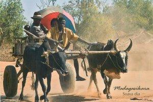 Madagascar oxen cart ethnic types postcard