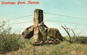Greetings from Kansas, KS, Limestone Post, Fox, Chrome Vintage Postcard g8295