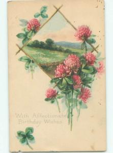 Divided-Back BEAUTIFUL FLOWERS SCENE Great Postcard AA3146