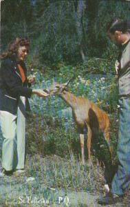 Hand feeding a deer , ST FELICIEN , Quebec, Canada , PU-1959