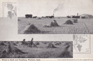 Wheat in stook & threshing , WEYBURN , Saskatchewan , Canada , 00-10s; 2-views