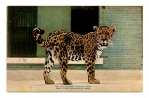 Jaguar Senor Lopez