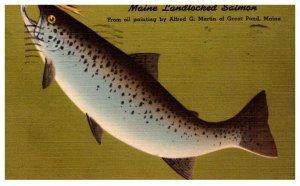 Maine  Landlocked Salmon