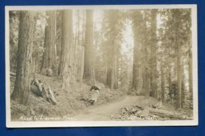Road to Sherman Tree Giant Forest Sequoia California ca real photo postcard RPPC