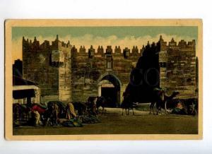 247174 JERUSALEM CAMELS Vintage postcard