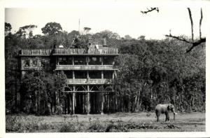 kenya, NYERI, Treetops with Elephant (1950s) RPPC