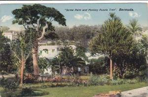 Bermuda Screw Palm and Monkey Puzzle Tree