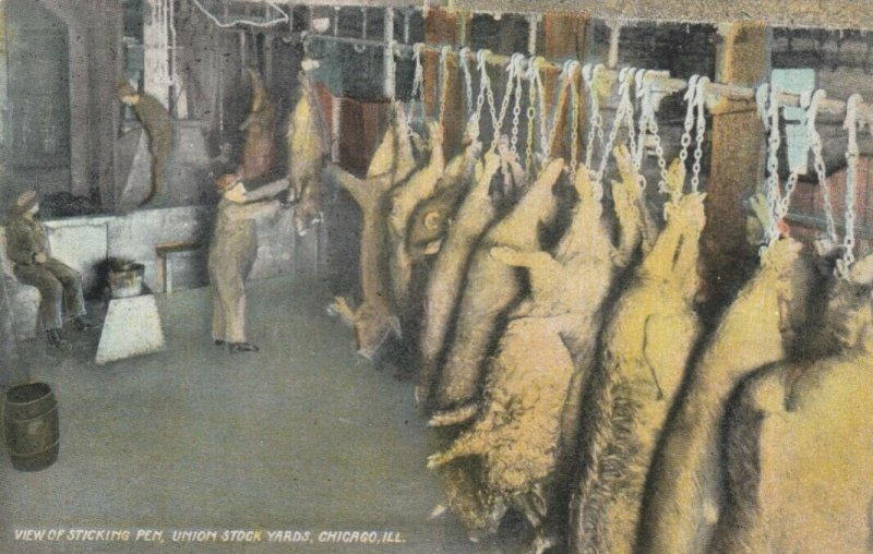 CHICAGO, Illinois, 1900-10s ; Sticking Pen , Union Stock Yards