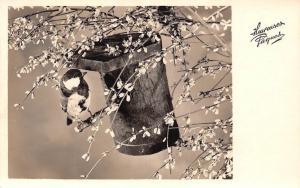 Heureuses Paques! Easter! Bird Nest Flowers