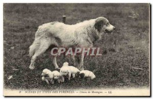 Old Postcard Pyrenees Mountain Dogs Dog