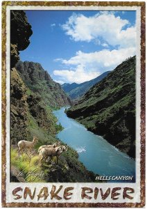 Hells Canyon & Snake River & Wild Mountain Sheep Idaho 7 Oregon Border 4 by 6