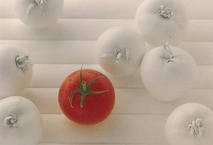White Tomato Tomatoes Vegetable Postcard