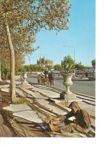 Postal 050277 : Mallorca (Baleares) Espa?. Palma. La Catedral desde el Paseo ...