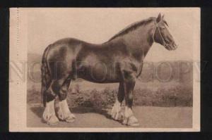 056711 HORSE Prozit CHAMPION 1939 Vintage Photo PC