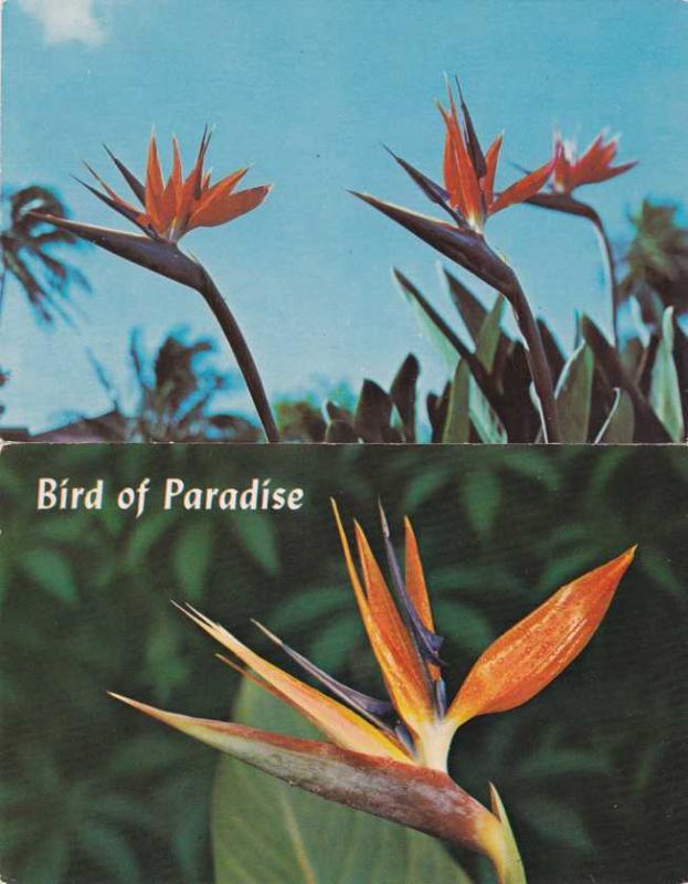 (2 cards) Bird Of Paradise Flower