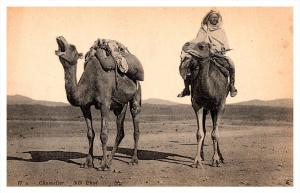 Camels and rider Africa Desert