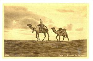Eventide in the Desert, Nomad with Camels, Cairo, Egypt, 00-10