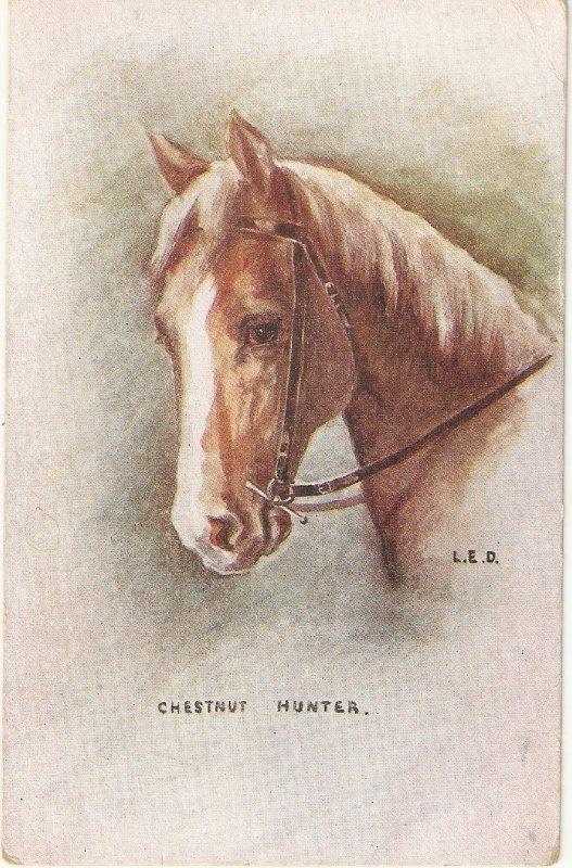 L.E.D.Chesnut Hunter Horse Nice old vintage English postcard