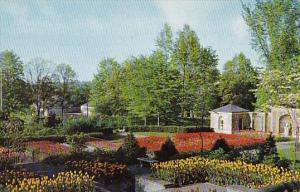 Ohio Mansfield Tulips Kingwood Center