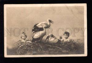 3032749 NUDE Babies in Nest STORKS Vintage PHOTO PC