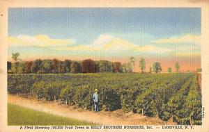Dansville New York Kelly Bros Nuseries Fruit Trees Vintage Postcard JC932997