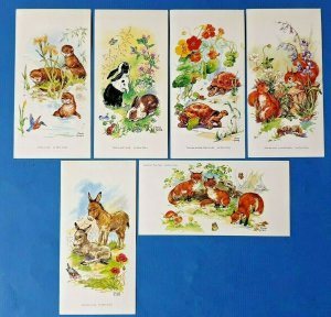 Set of 6 Art Postcards, Animals, Nature, Wildlife, Flowers by Rene Cloke AS0
