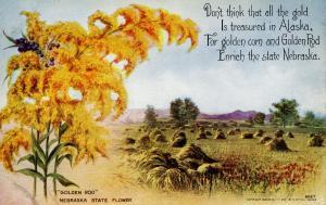Nebraska State Flower - Golden Rod
