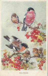 AS; M. BOWLEY, 1900-10s; Bull Finches