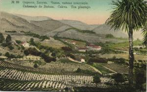 georgia russia, BATUMI BATUM BATOUM, Tea Plantation (1910s)