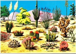 Arizona Cactus and Desert Flora Of The Great Southwest