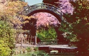 CA - San Francisco, Japanese Tea Garden in Golden Gate Park- Moon Bridge