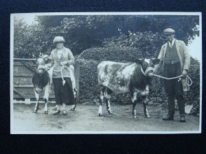 Farming Portrait FARMERS WITH YOUNG BULLS CATTLE Country Life - Old RP Postcard