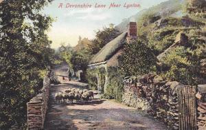 Sheep Herd , Devonshire Lane near LYNTON , England , 00-10s