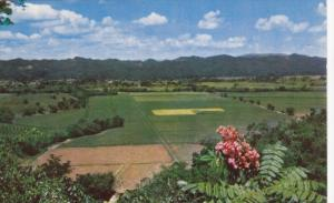 JAMAICA, PU-1966; Sugar Estate