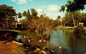 Florida Miami Springs Miami Springs Villas and Kings Inn The Lagoon Tropical ...