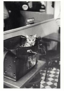 Cat in a Satchel in a Paris Restaurant by Edouard Golbin Postcard