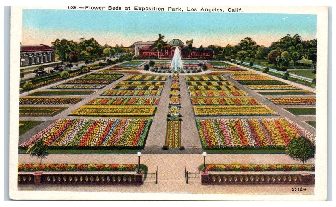 Early 1900s Flower Beds at Exposition Park, Los Angeles, CA Postcard ...